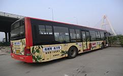 上海青金线公交车路线